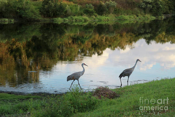 Wall Art - Photograph - Strolling Sandhills By Florida Pond by Carol Groenen