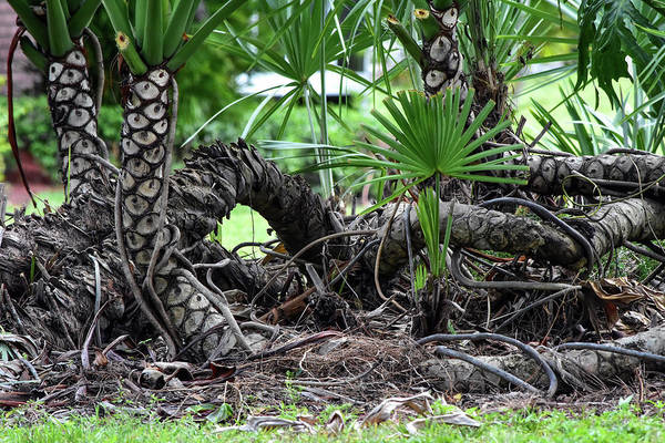 Wall Art - Photograph - Strong Roots by William Tasker