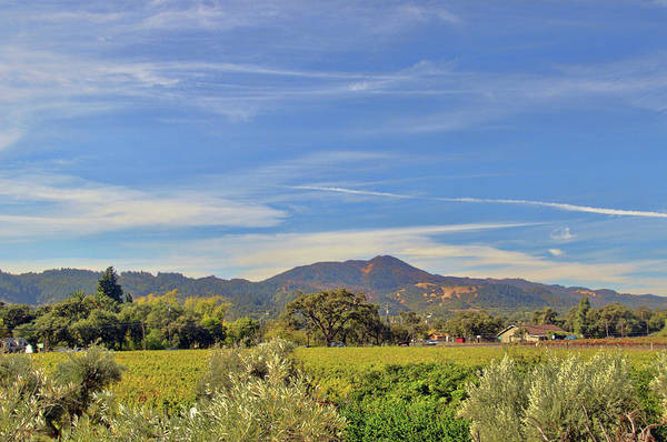 Camera Raw Photograph - Stuck In Wine Country by Brenton Cooper