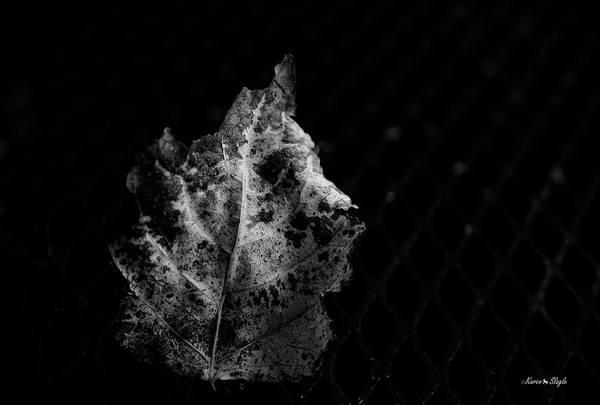 Photograph - Stuck by Karen Slagle