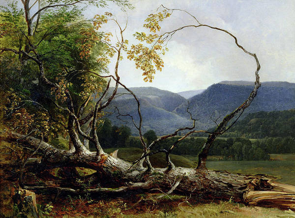 Wall Art - Painting - Study From Nature, Stratton Notch by Asher Brown Durand