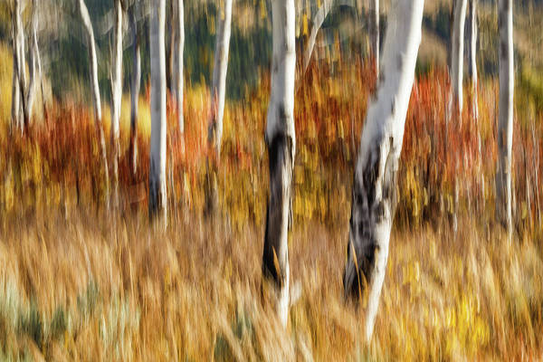 Wall Art - Photograph - Study In Abstract No. 12, Grand Teton by Ann Skelton