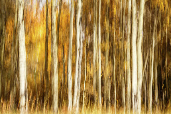 Wall Art - Photograph - Study In Abstract No. 15, Grand Teton by Ann Skelton