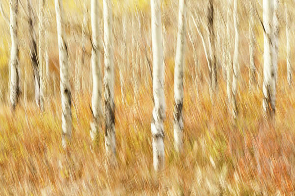 Wall Art - Photograph - Study In Abstract No. 8, Grand Teton by Ann Skelton