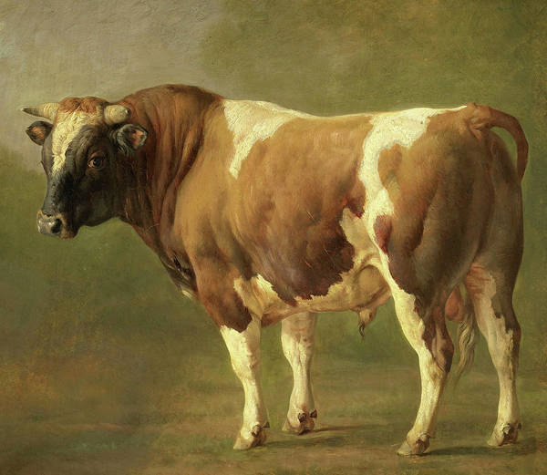 Wall Art - Painting - Study Of A Bull, 1867 by Jacques Raymond Brascassat