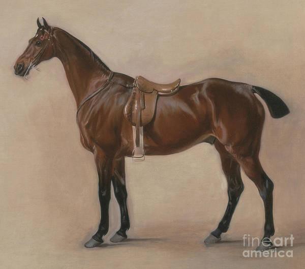 Wall Art - Painting - Study Of A Saddled Bay Hunter, 1828  by John E Ferneley