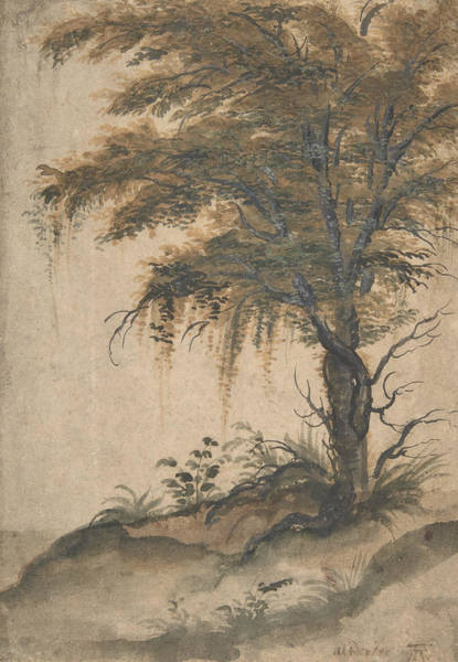 Drawing - Study Of A Tree by Marten van Valckenborch