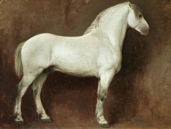 Wall Art - Painting - Study Of A White Horse by Jean-Leon Gerome