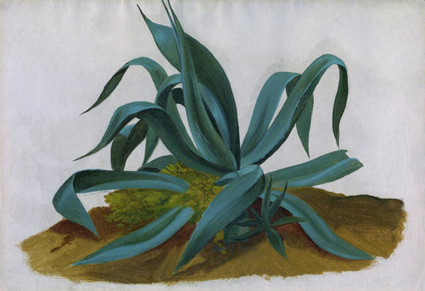 Wall Art - Painting - Study Of An Agave - Digital Remastered Edition by Johan Christian Dahl