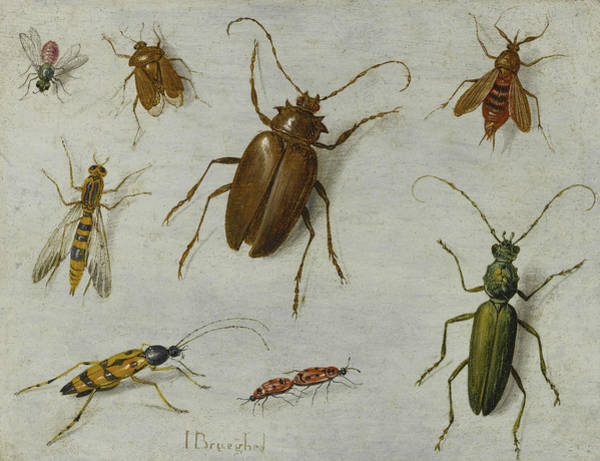 Painting - Study Of Insects by Jan van Kessel the Elder