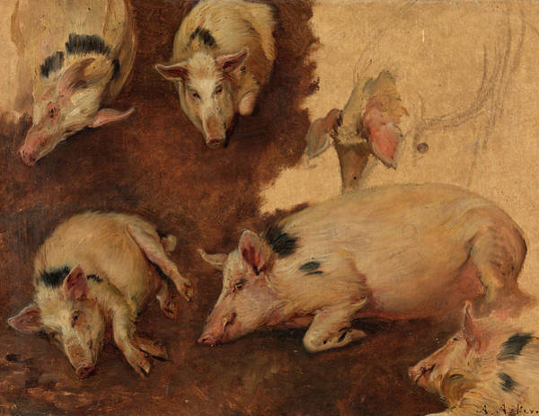 Breeding Painting - Study Of Six Pigs, 1900 by Anders Askevold