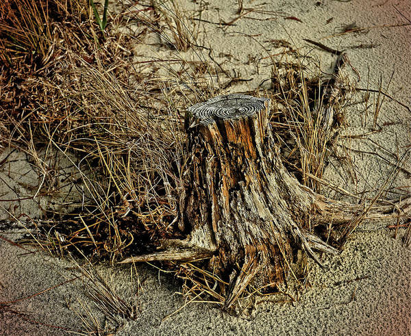 Photograph - Stump At The Beach by Maggy Marsh