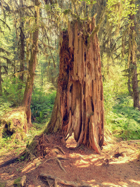 Stump In The Rainforest Art Print