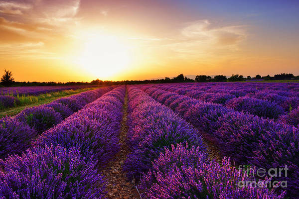 Wall Art - Photograph - Stunning Landscape With Lavender Field by Oleg Znamenskiy