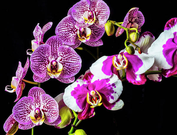 Wall Art - Photograph - Stunning Orchids by Garry Gay