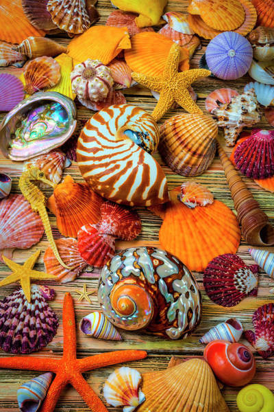 Wall Art - Photograph - Stunning Seashell Still Life by Garry Gay