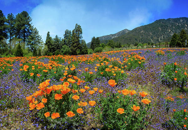 Photograph - Stunning Wildflowers At The Oak Glen Preserve by Lynn Bauer