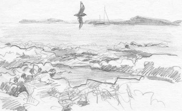 Drawing - Subantarctic Island by Abby McBride