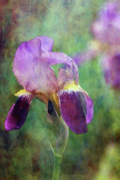 Photograph - Subdued 0252 Idp_2 by Steven Ward