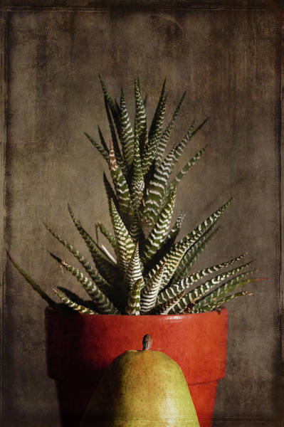 Wall Art - Photograph - Succulent And Pear by Jim Larimer