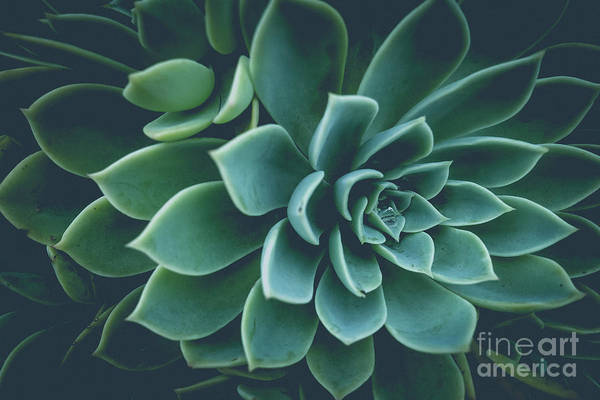 Wall Art - Photograph - Succulent Plants Film Fade by Wendy Fielding