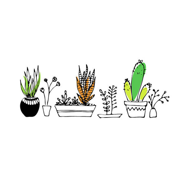 Drawing - Succulents by Jocelyn Friis