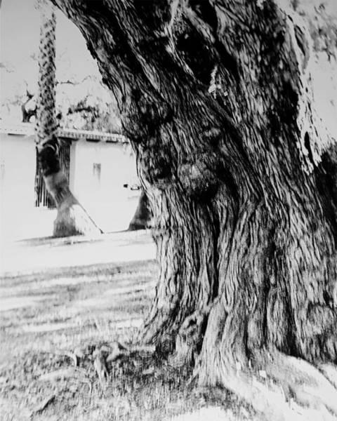 Photograph - Sudden Movement by Maria Reverberi