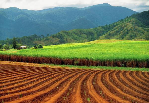 Wall Art - Photograph - Sugar Cane Plantation Near Innisfail by Australian Scenics