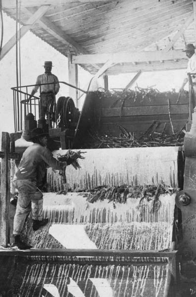 Greater Antilles Photograph - Sugar Crushing by Spencer Arnold Collection