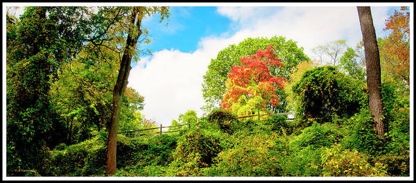 Acer Saccharum Photograph - Sugar Maple Stands Out In Early Fall by A Gurmankin