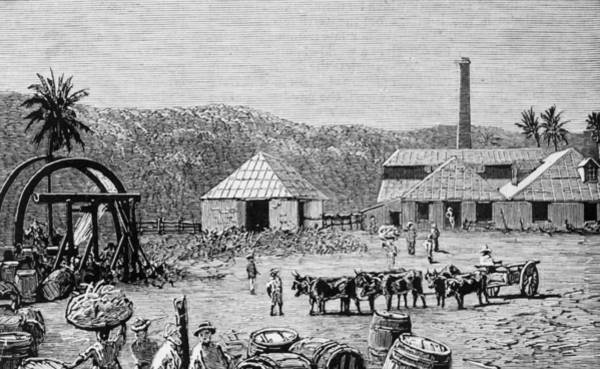 Farm Photograph - Sugar Mills by Hulton Archive