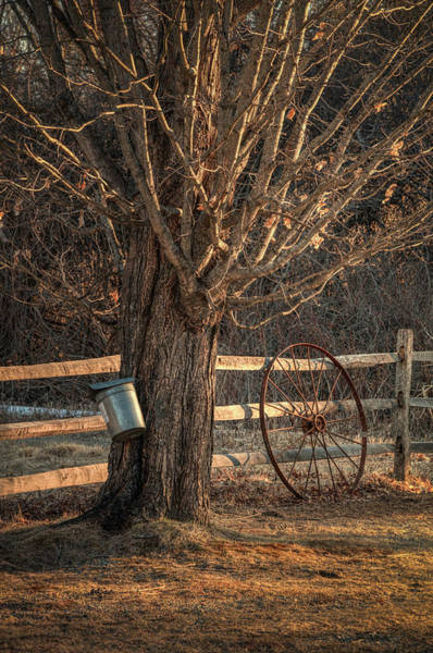 Photograph - Sugaring Season by Thomas Gaitley