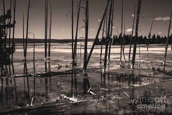 Photograph - Sulfur Field by Mae Wertz