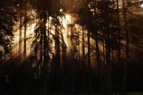 Photograph - Sultry Morning Radiance by Tikvah's Hope