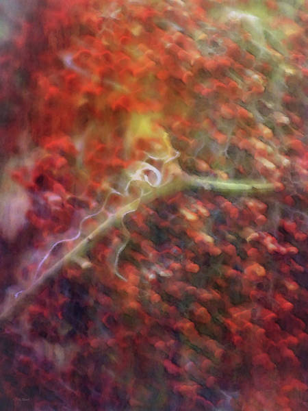 Photograph - Sumac Berries In The Rain 0152 Idp_2 by Steven Ward