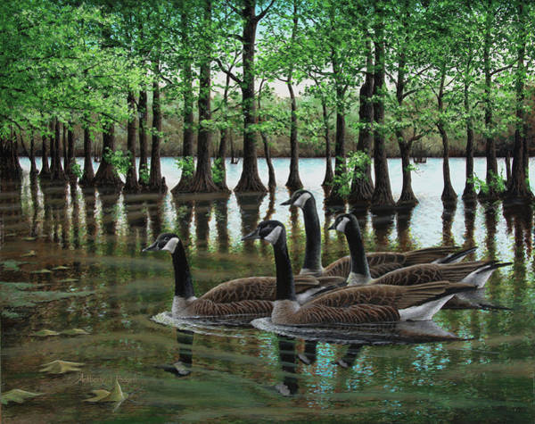 Summer Among The Cypress Art Print