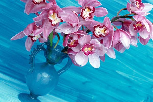 Cymbidium Photograph - Summer Arrangement, Orchid,  Pink by Linda Burgess