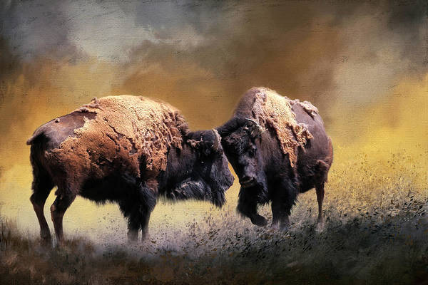 Wall Art - Photograph - Summer Bison by Donna Kennedy