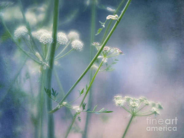 Wall Art - Photograph - Summer Blossoms by Priska Wettstein