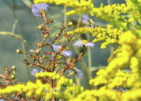 Photograph - Summer Colors by JAMART Photography