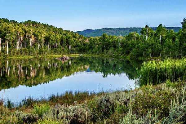 Photograph - Summer Cove At Ivie Pond by TL Mair
