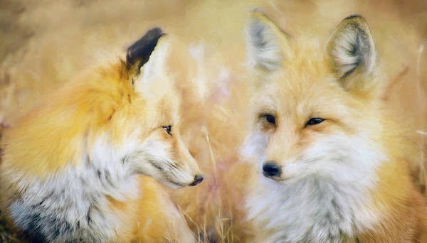 Wall Art - Mixed Media - Summer Dreaming Foxes by Amanda Lakey
