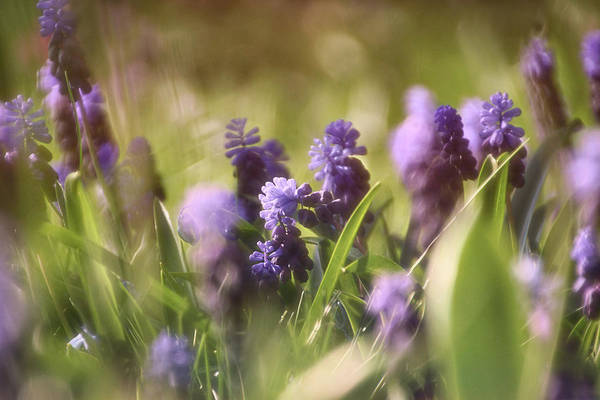 Photograph - Summer Dreams II by Leda Robertson