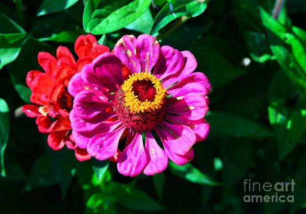 Wall Art - Photograph - Summer Flower by Jeff Swan