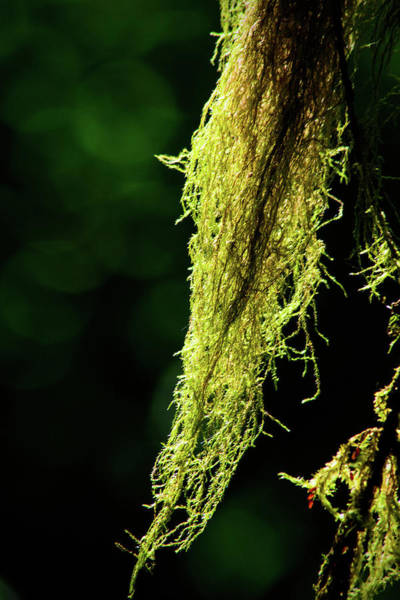 Photograph - Summer Forest Moss by Tikvah's Hope