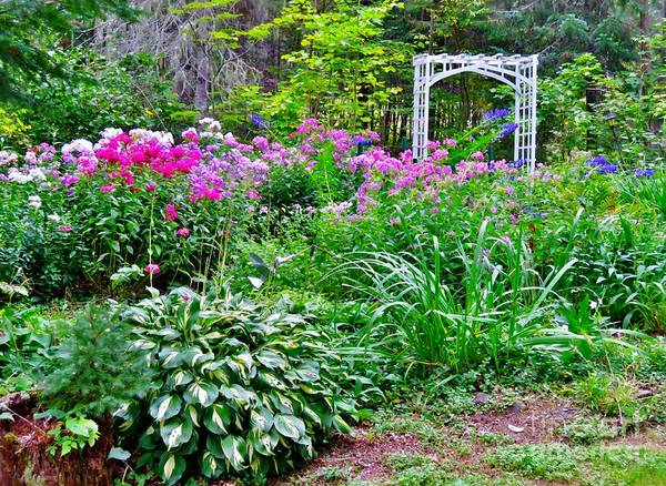 Madawaska Lake Photograph - Summer Gardens by Vickie Ketch