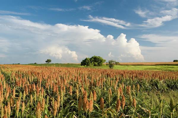 Field Photograph - Summer Harvest Field by Dhuss