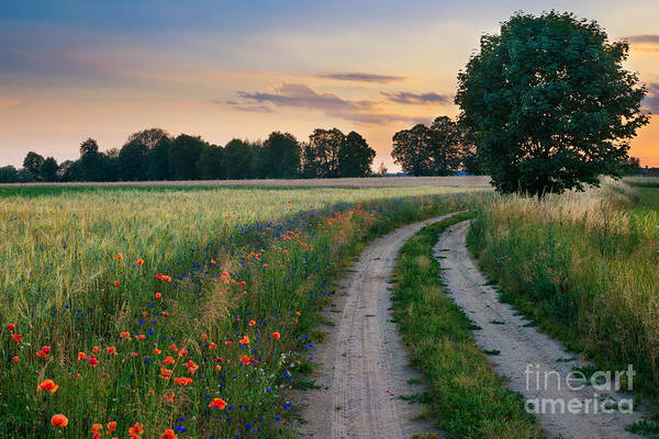 Cultivated Wall Art - Photograph - Summer Landscape With Country Road And by Ysuel