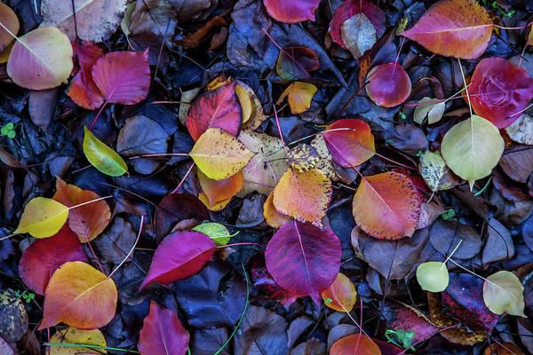 Wall Art - Photograph - Summer Leaves by Az Jackson