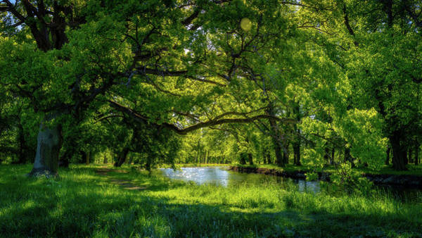 Wall Art - Photograph - Summer Morning In The Park by Nicklas Gustafsson